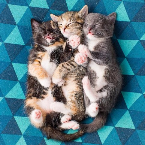 Тези котета са просто страхотни!