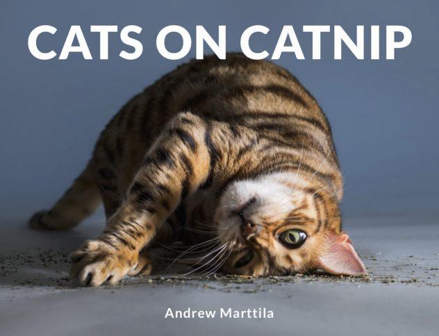 книга с котки