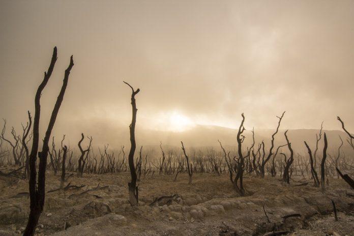 суша да спасим планетата
