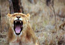 гневът