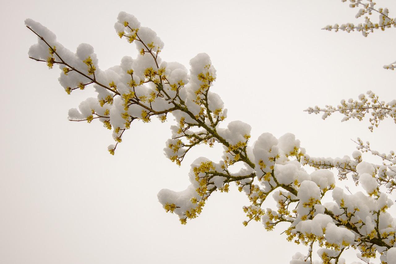 цвят, покрит от сняг