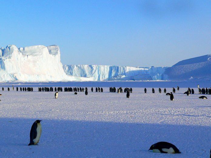 Императорски пингвини в Антарктида