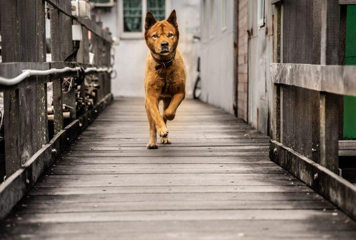 Ктиай - куче
