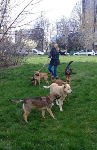 осиновени кучета